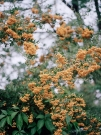 http://www.janinebaechle.com/files/gimgs/th-34_15g-Orangene-Beeren.jpg
